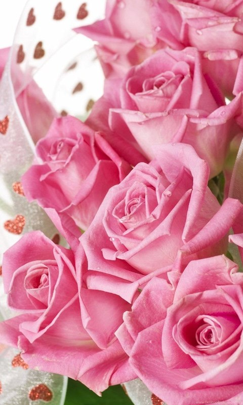 Beautiful Pink Rose Flowers Wallpapers Full Hd Desktop Background