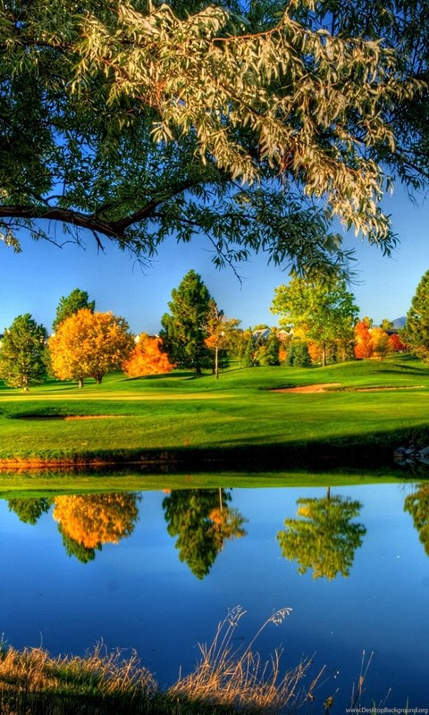 Nature sunny tree 2560x1440 hd wallpapers and free stock photo desktop background - Sunny name wallpaper ...
