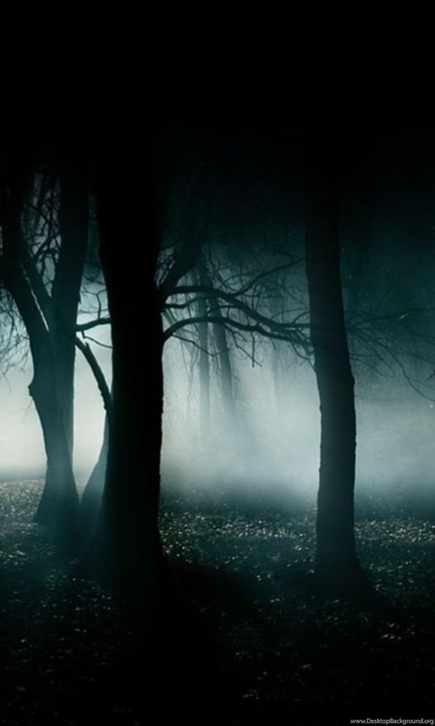 Dark Forest Landscape Background Wallpaper Hd Resolution Dlwallhd Android Black