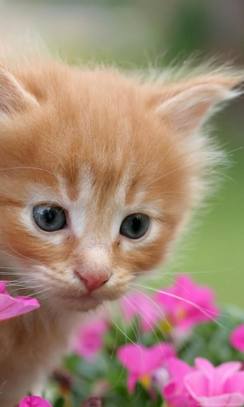 Hd Cat Wallpapers Kitten Images Cute Cat Photos Hairy