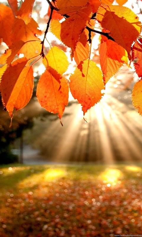 Fall Leaves And Pumpkins Tumblr Desktop Background