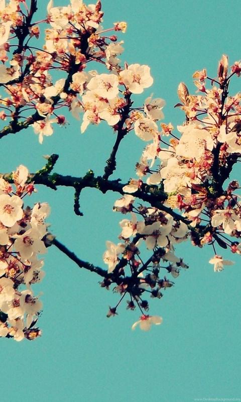 Jestingstock Com Spring Flower Wallpapers Tumblr Desktop Background