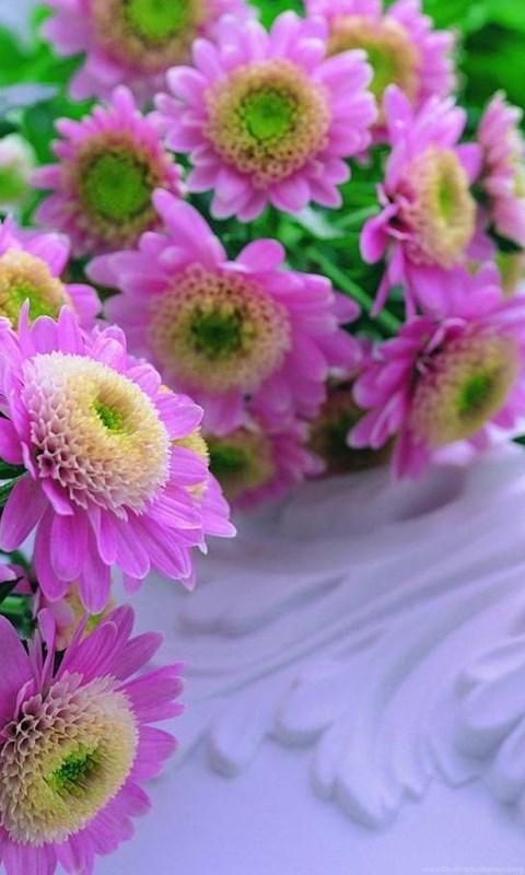 Beautiful Flower Wallpapers Free Download 7hdwallpapers Desktop