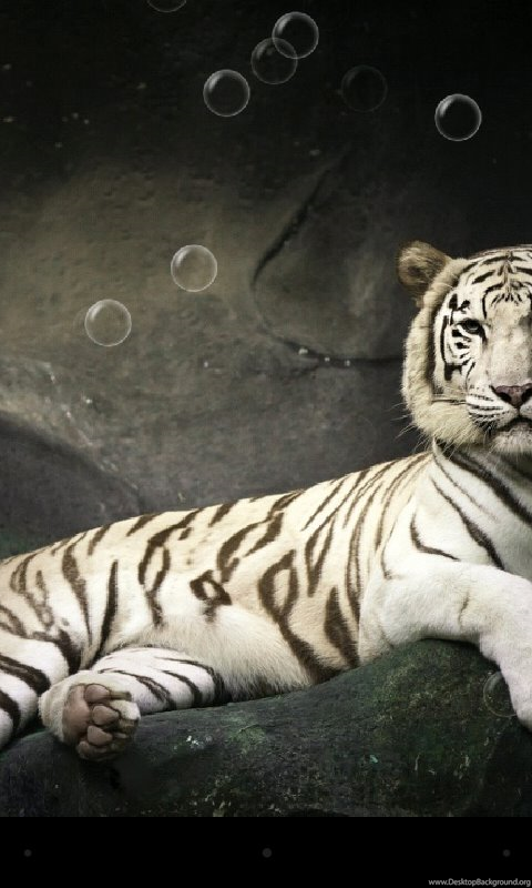Tiger Live Wallpapers Android Apps On Google Play Desktop Background