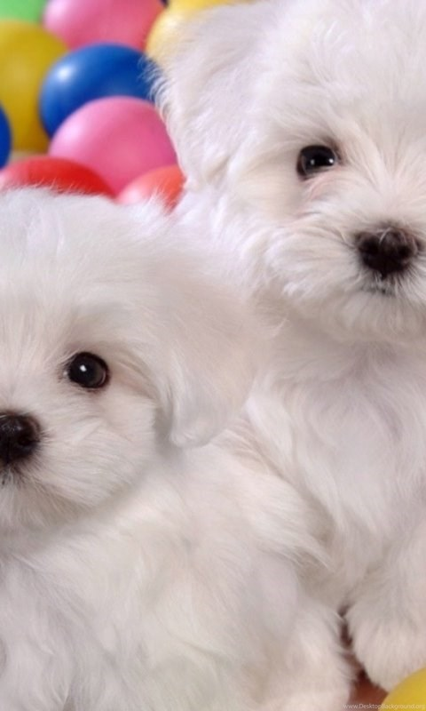 Wallpapers Download Free Image Search Cute Dogs Free Download