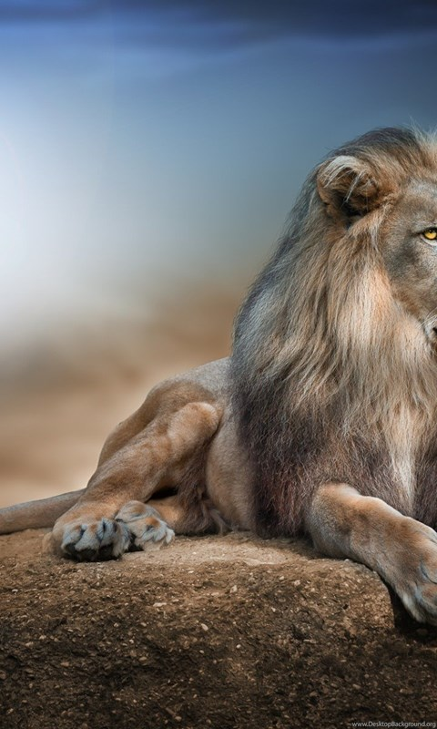 Wallpapers Hd Lion In Jungle Hd Wallpapers Expert Desktop Background