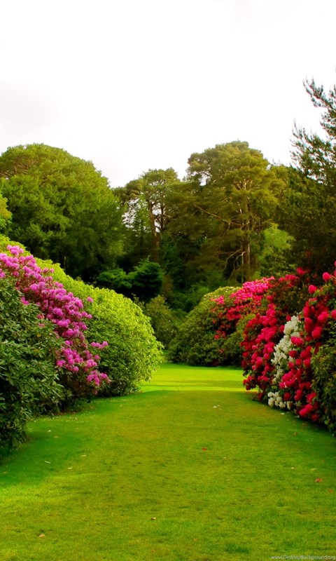 Beautiful rose garden wallpaper