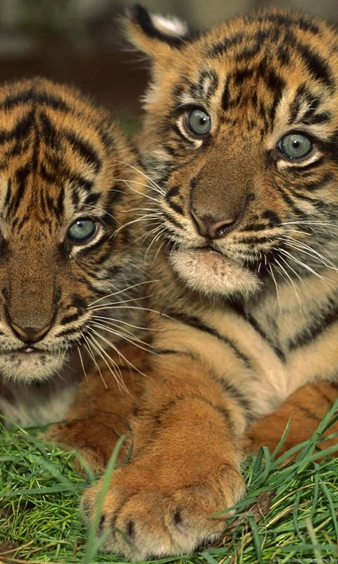 Cute Baby Animals Wallpapers Hd Wallpapers And Pictures Desktop Background