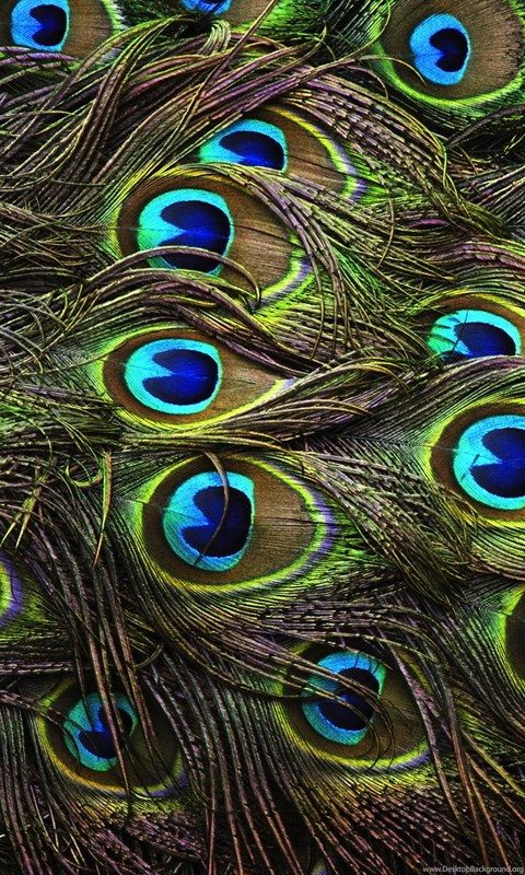 Peacock Feathers Backgrounds HD Wallpapers Desktop Background