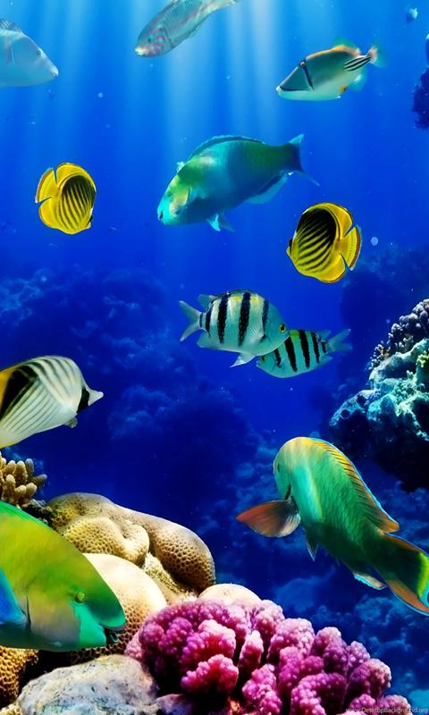 3d live fish wallpapers fish tank live wallpaper  fish