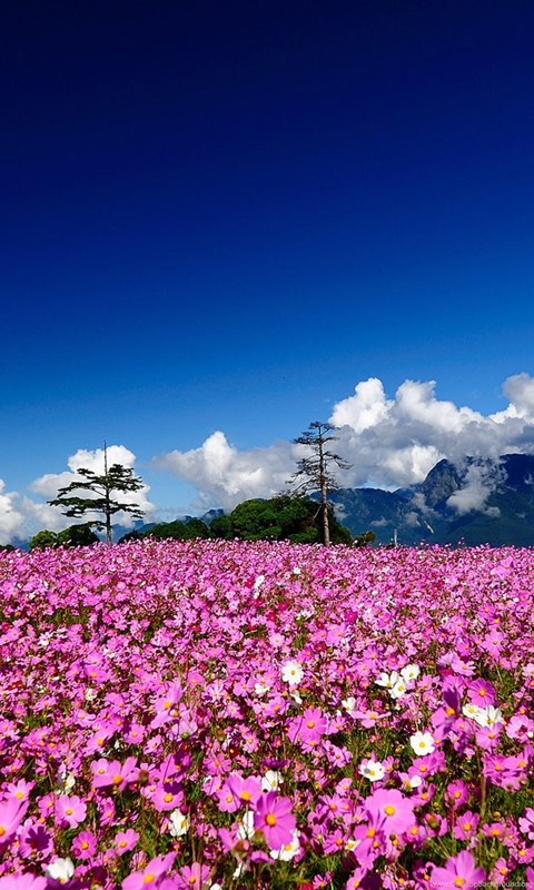 Pink Flowers And Cloudy Sky Nature HD Wallpapers Nature ...