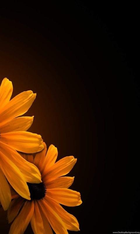 Flower On Black Backgrounds Wallpapers Hd High Resolution Desktop Background