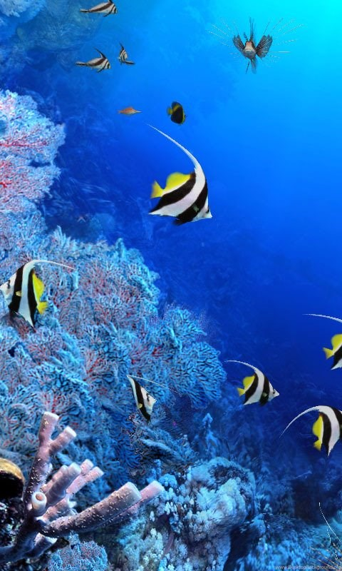 3d aquarium wallpapers free download download fish tank