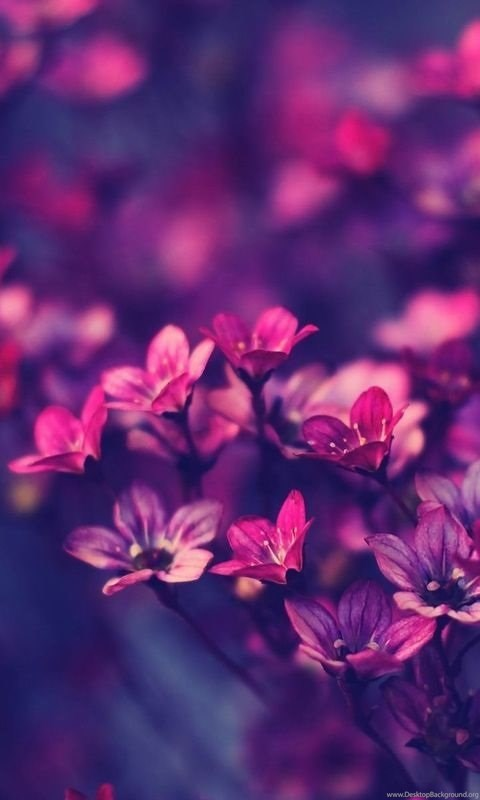 Violet Flowers Wallpapers Hd Pictures Desktop Background