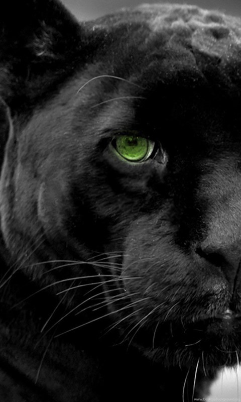 Black Panther Wallpapers Hd Wallpapers And Pictures Desktop Background