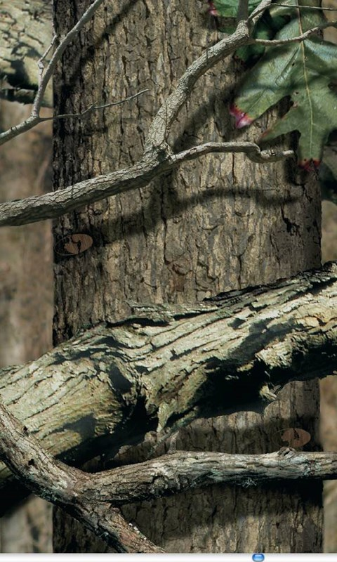 Mossy Oak Camouflage Wallpapers Wallpapers Zone Desktop Background