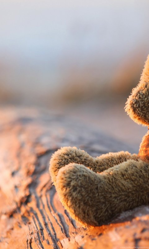 Lonely Teddy Bear Wallpapers Desktop Background