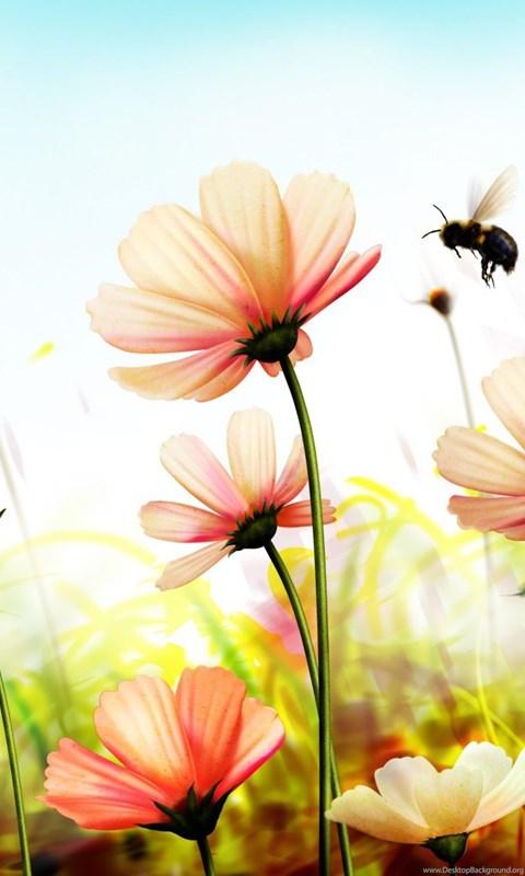 Nature Flowers Wallpapers Hd Wallpapers Desktop Background