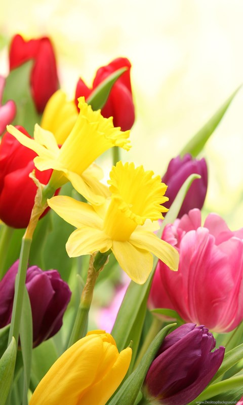 SPRING FLOWERS WALLPAPER Desktop Background