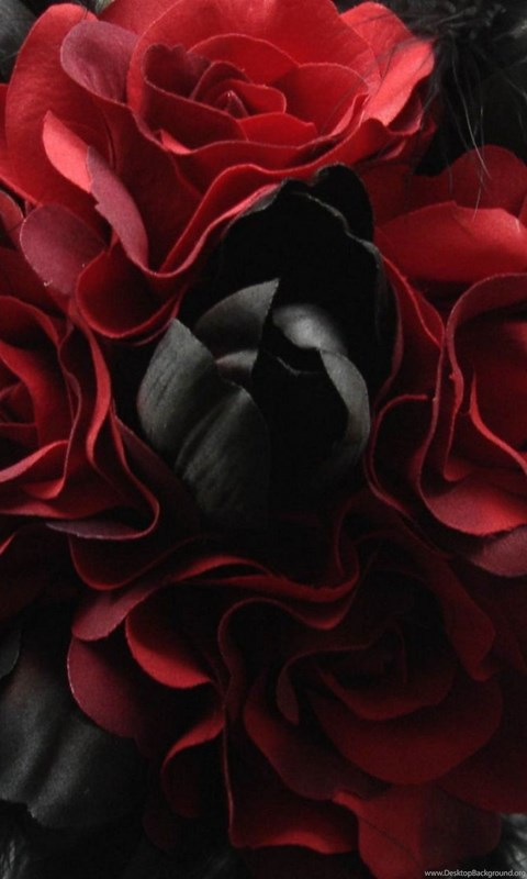Wallpaper Gothic Abstract Red Rose Black White Backgrounds