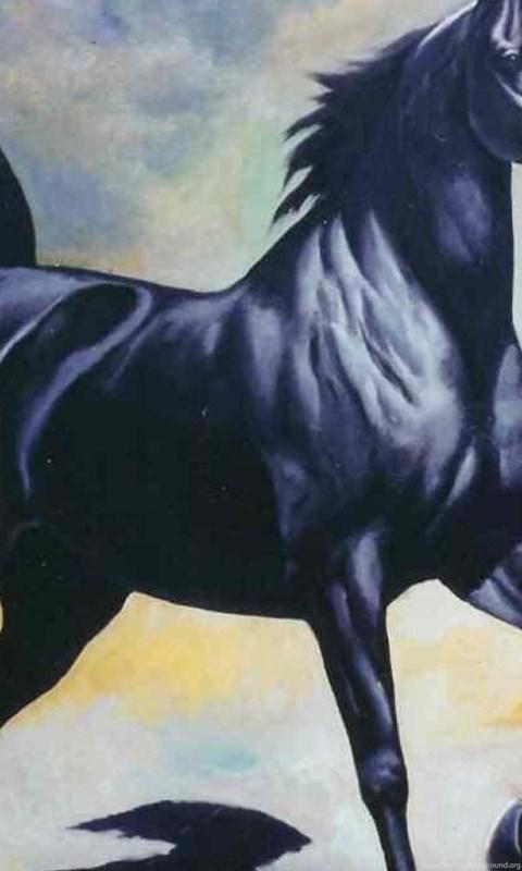 Download Arabian Horses Wallpapers Arab Black Horse Desktop Background