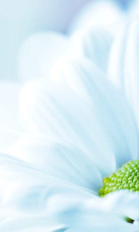 White Flower Backgrounds Wide Hd Wallpapers Wallpapers List Desktop