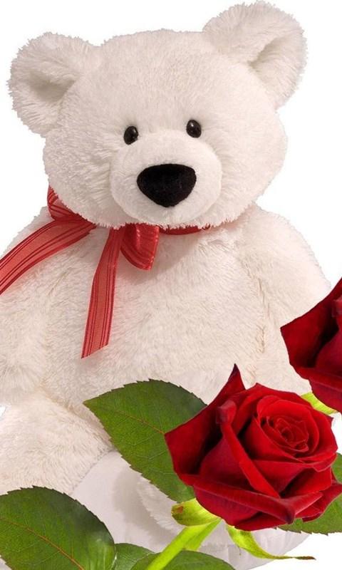 Loving Teddy Bear Hd Wallpapers Free Download For Desktop Desktop