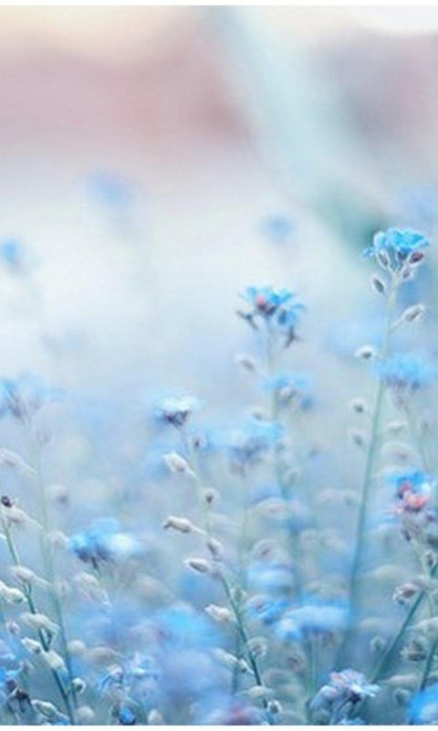 Blue Flowers Tumblr Wallpapers Desktop Background