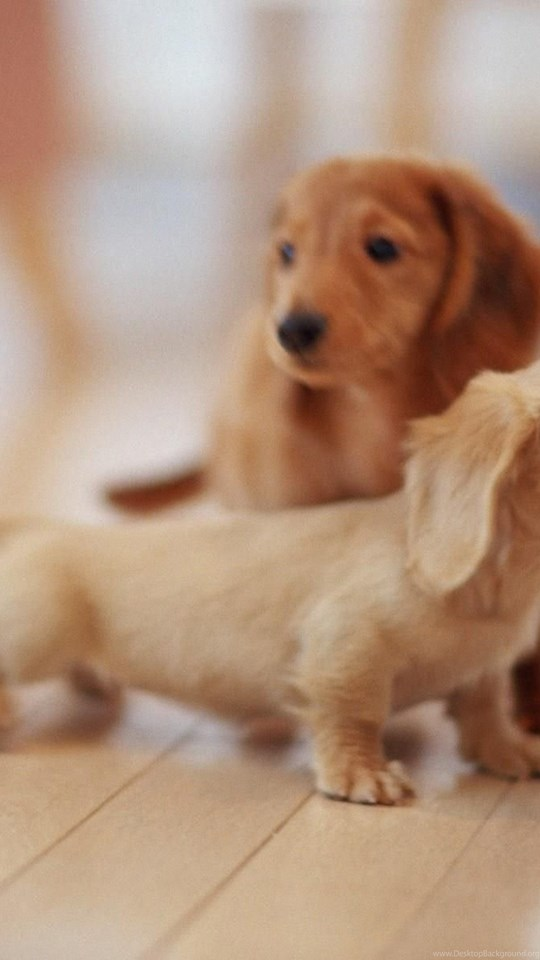 3d Cute Puppies Wallpaper Images Dogs Wallpapers 3d Cute Dog
