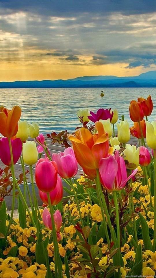 Spring sunset at lake garda desktop backgrounds desktop background - Backgrounds springtime ...