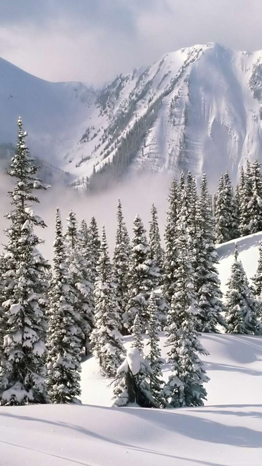 Download Nature Desktop Wallpapers Winter Wallpapers Phone Desktop
