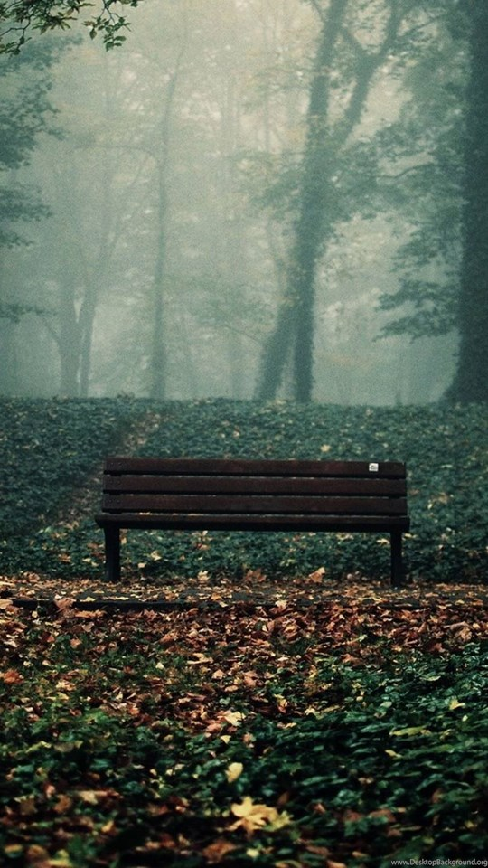 Old Bench On Nature Wallpapers Full Hd Desktop Background