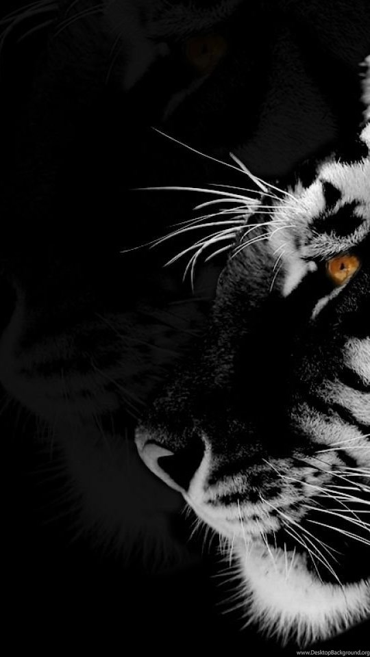 Tiger Black And White 73147 Hd Wallpapers Desktop Background