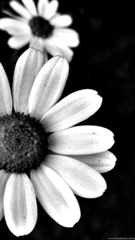 Popular Page 215 Black And White Flower Backgrounds Pink Flower
