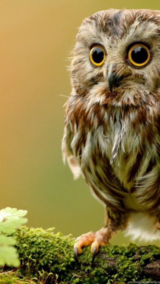 Cute owl wallpaper desktop background mobile android tablet voltagebd Images