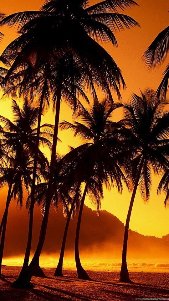 California palm trees wallpaper desktop background - Palm tree wallpaper for android ...