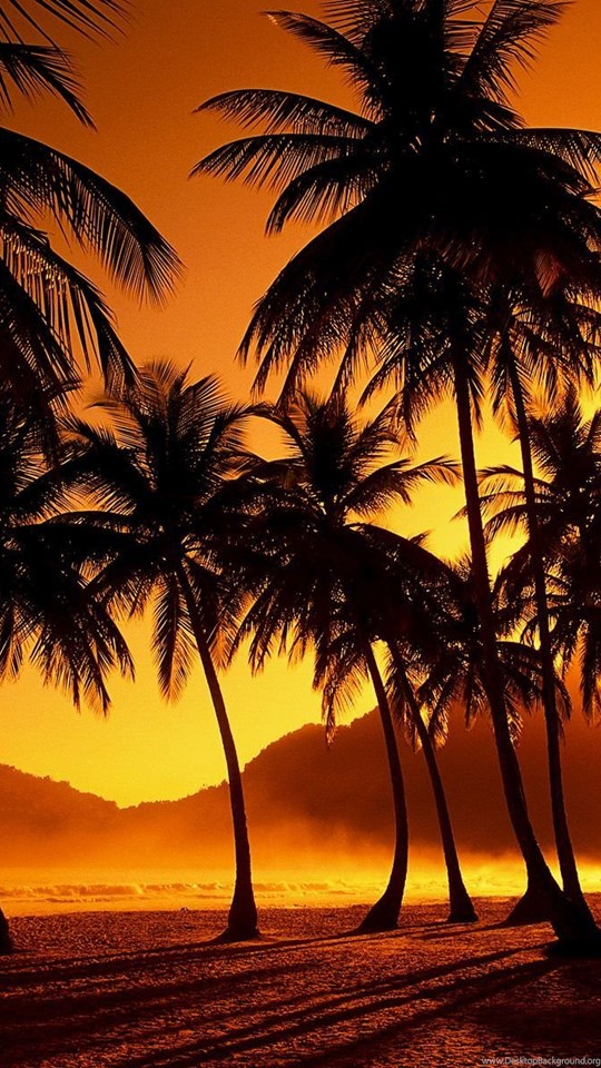Beach Sunset Palm Tree Tumblr Desktop Background