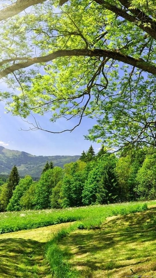 Most Beautiful Green Nature Wallpapers In The World Desktop Background