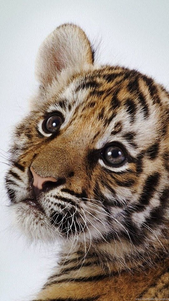 Wallpaper Backgrounds Cute Baby Animals Wallpapers Mobiles ...