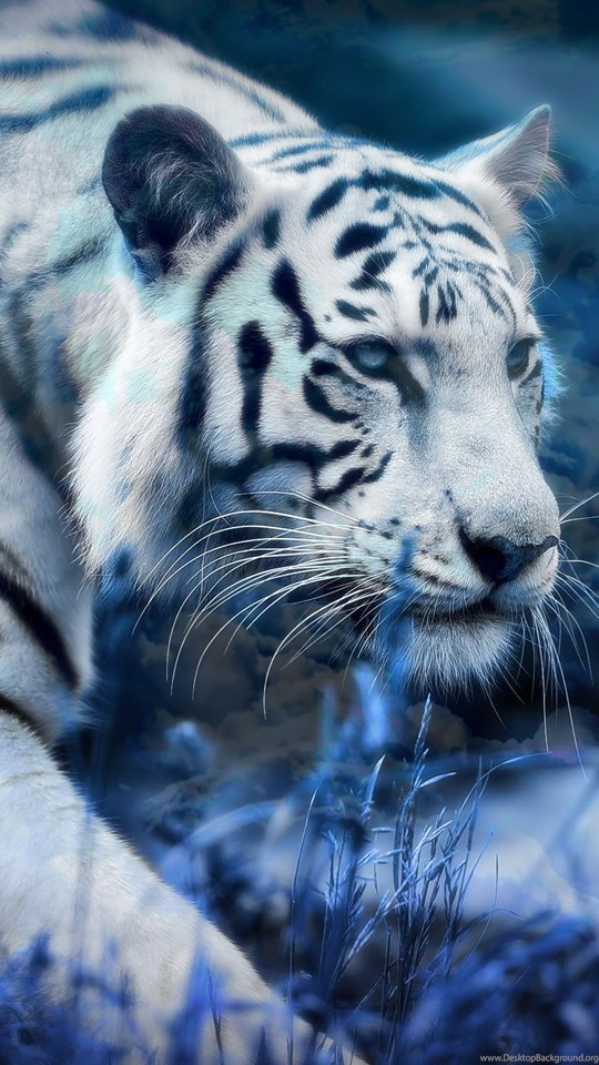 white tiger wallpapers for android phones