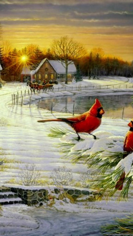 Cardinals Birds Cardinal S Christmas Wallpapers Hd