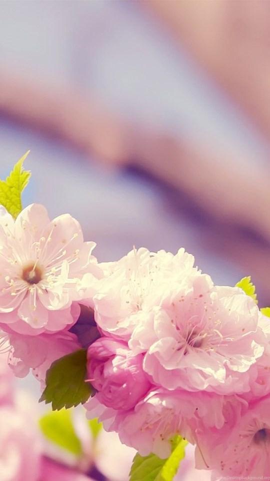 Spring flowers backgrounds desktop wallpapers cave desktop background mobile android tablet mightylinksfo