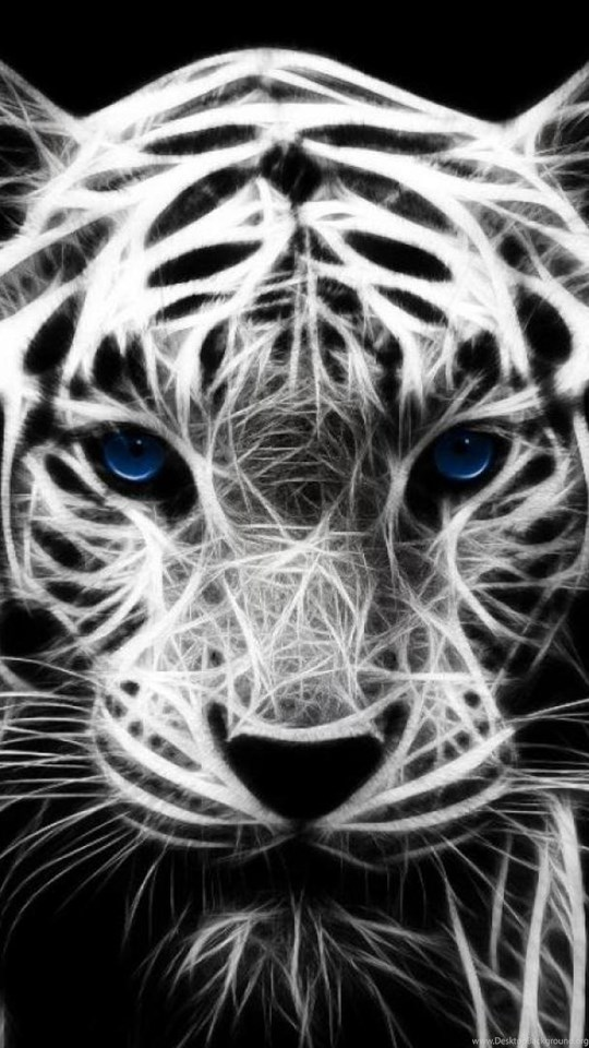 677954 white tiger with blue eyes