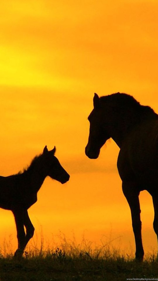 Baby Horse Wallpapers Free Hd Wallpapers Desktop Background