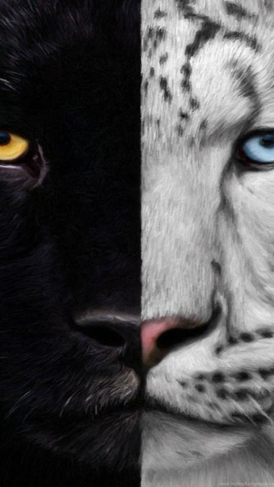 Cats Night Day Panther White Black Tiger Free Desktop Wallpapers Desktop Background