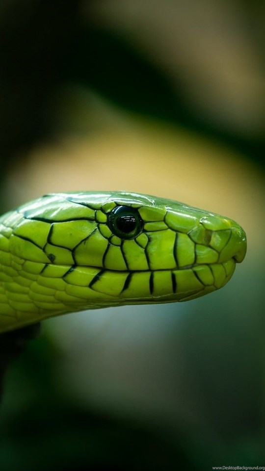 Rough green snake wallpapers hd download for desktop desktop background android hd 540x960 360x640 thecheapjerseys Images