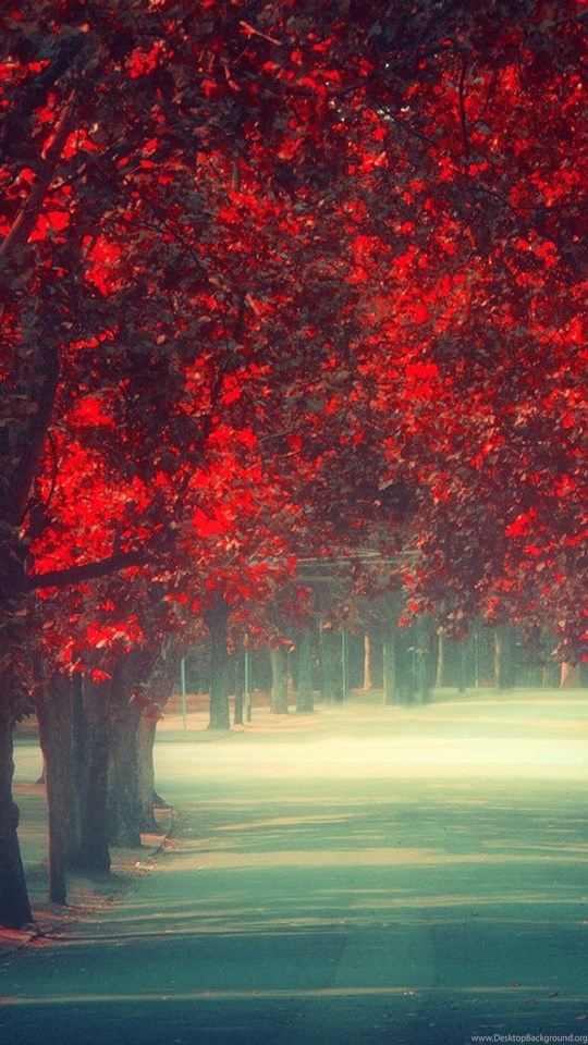 Nature Wallpaper Fall Tumblr Phone Wallpapers Wallpapers Hd
