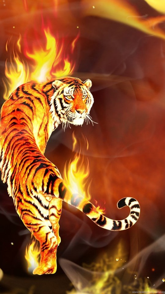 Beautiful Tiger Wallpapers Hd Wallpapers Desktop Background
