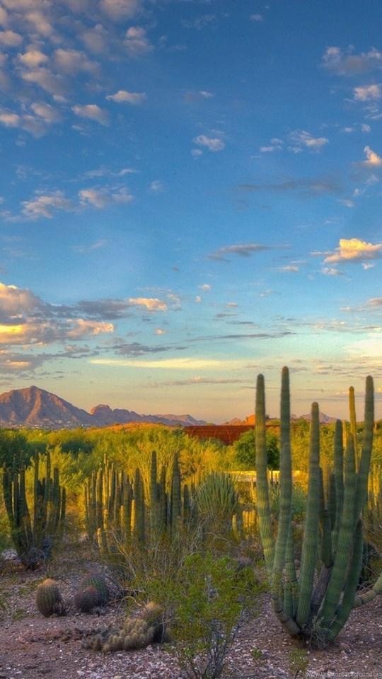 Landscape Nature Desert Cactus Mountain Arizona