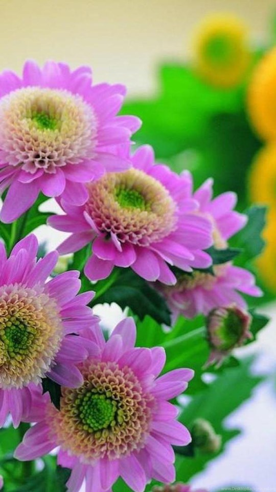 Lovely pink flowers wallpapers desktop background mobile android tablet mightylinksfo